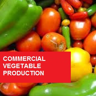 Commercial Vegetable Production 100 Hours Certificate Course
